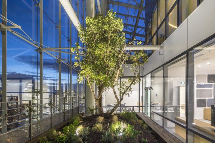tall tree growing inside glass-enclosed room