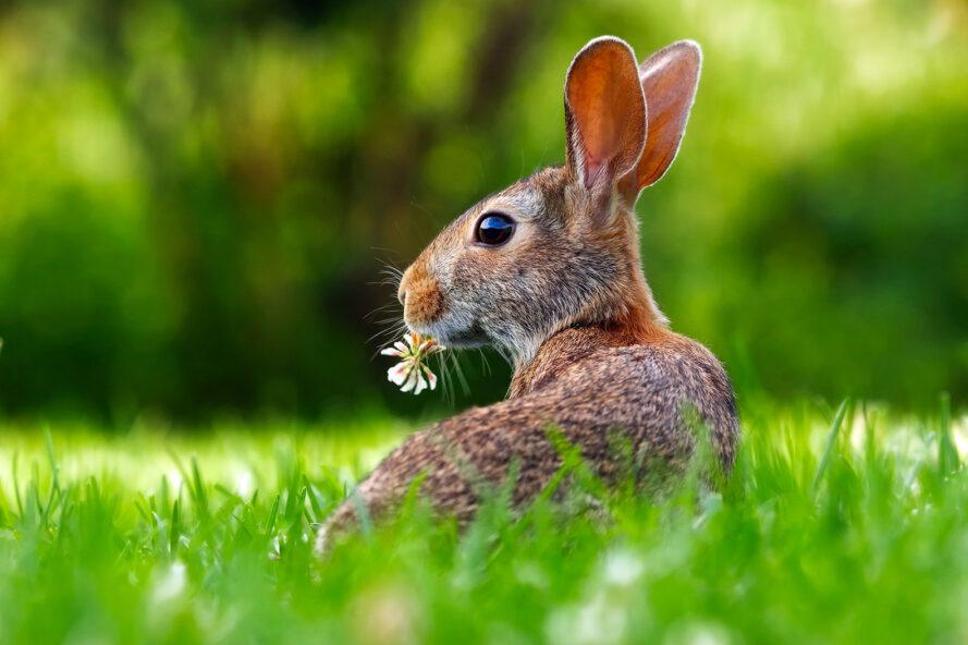 a rabbit with a flower in its mouth on the grass