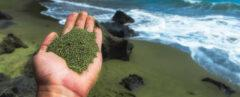 hand holding green sand with ocean in the background
