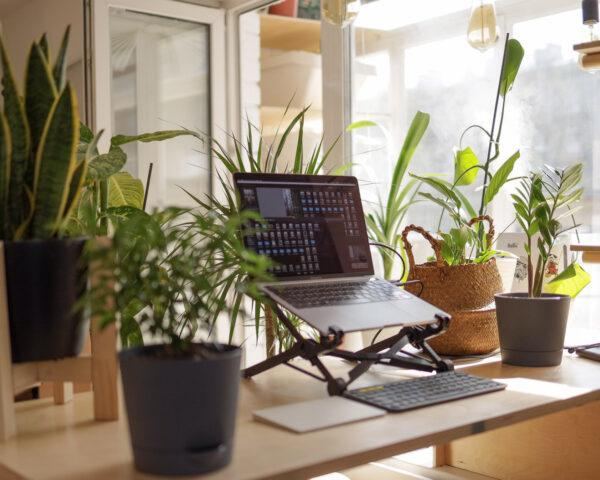 laptop on a riser on wood table beside several houseplants