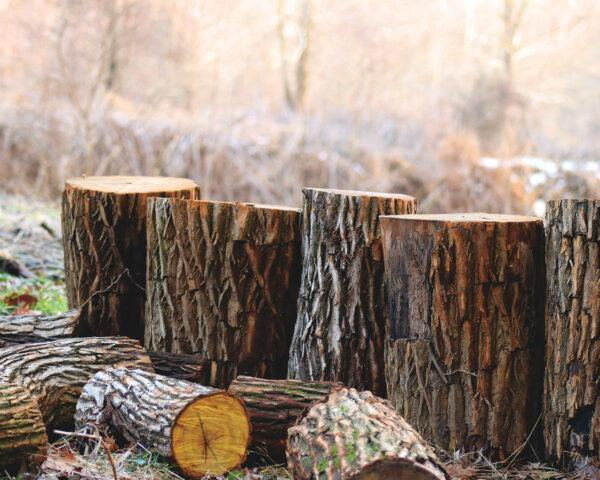 five cut tree stumps