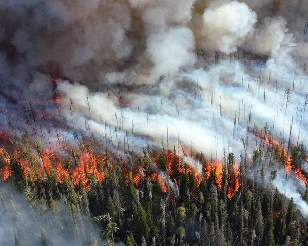 a bird's-eye view of smoke and fire in a forest
