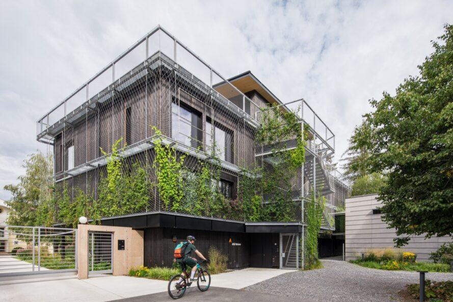 cyclist riding past timber building covered in vines