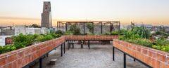 rooftop garden in raised brick planters