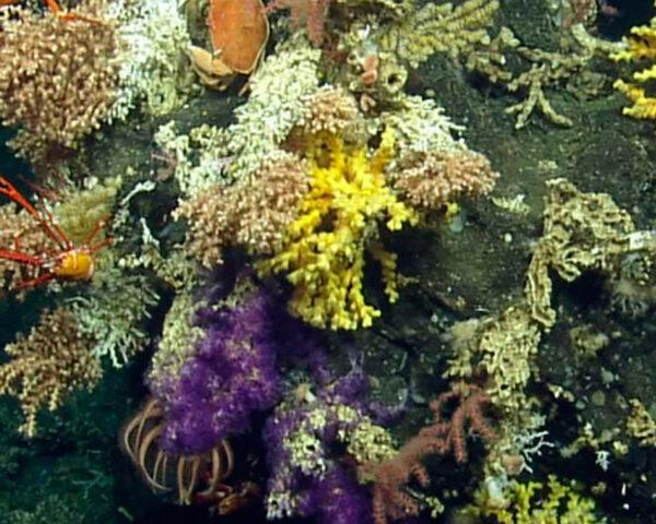 coral on an underwater seamount