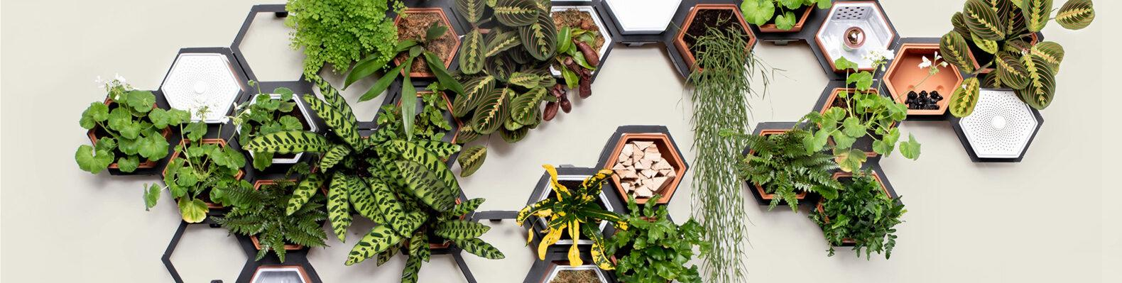 hexagon-shaped garden pods on a wall