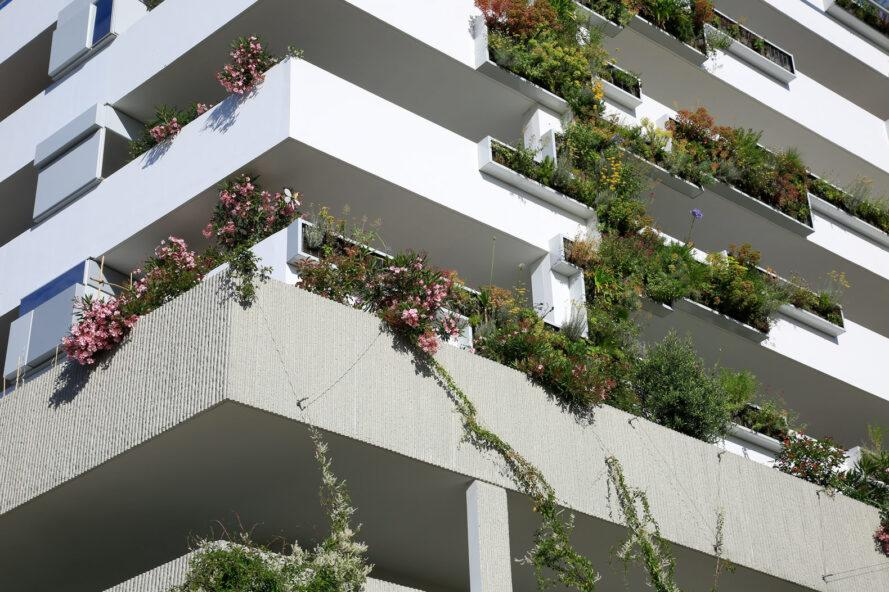 close-up of plants growing over balcony sides
