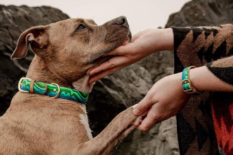 dog with green collar and human with matching green bracelet