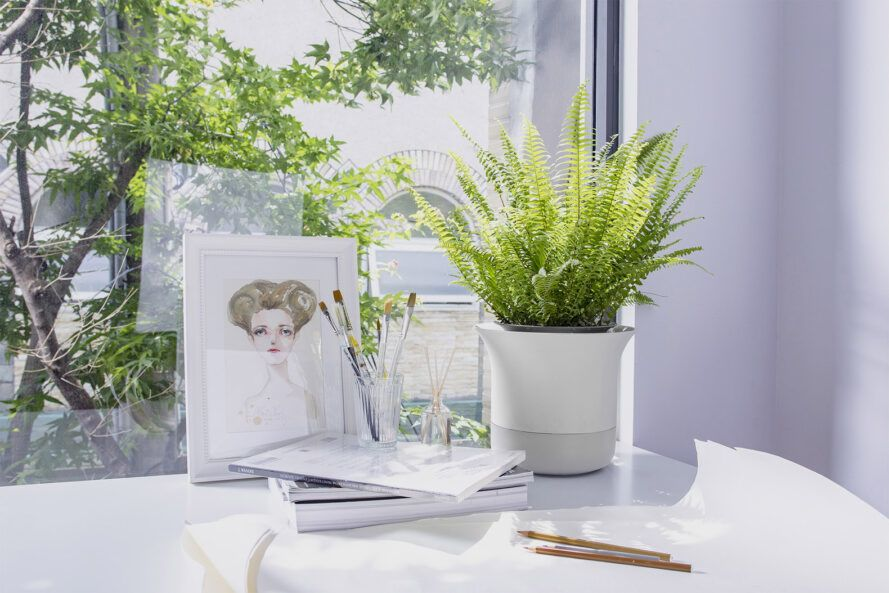 A green plant in a white pot against a desk and window background.