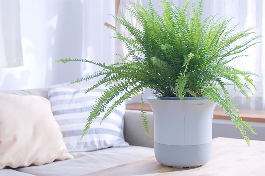 A green plant in a white pot against a pillow background.