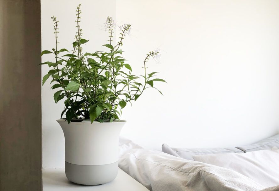 A green plant in a white pot against a bedroom background.