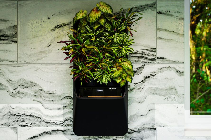 Attached to a marble wall, a black box with greenery growing out of it.