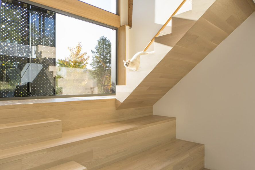 Light-colored wood stairs with a cat walking down while light streams in through a nearby window.