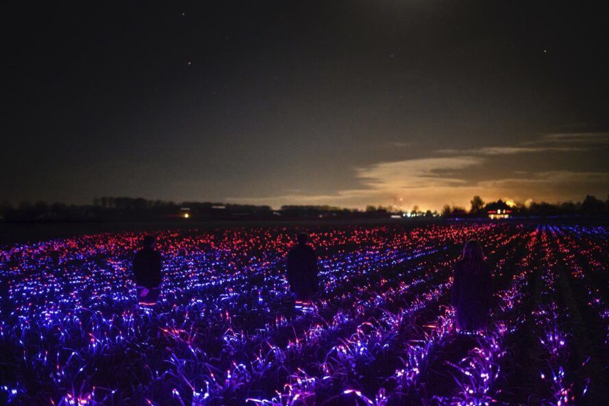 field of purple and red LED lights