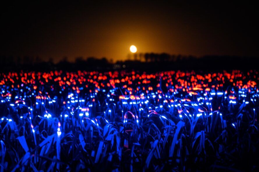blue and red LED lights in a field