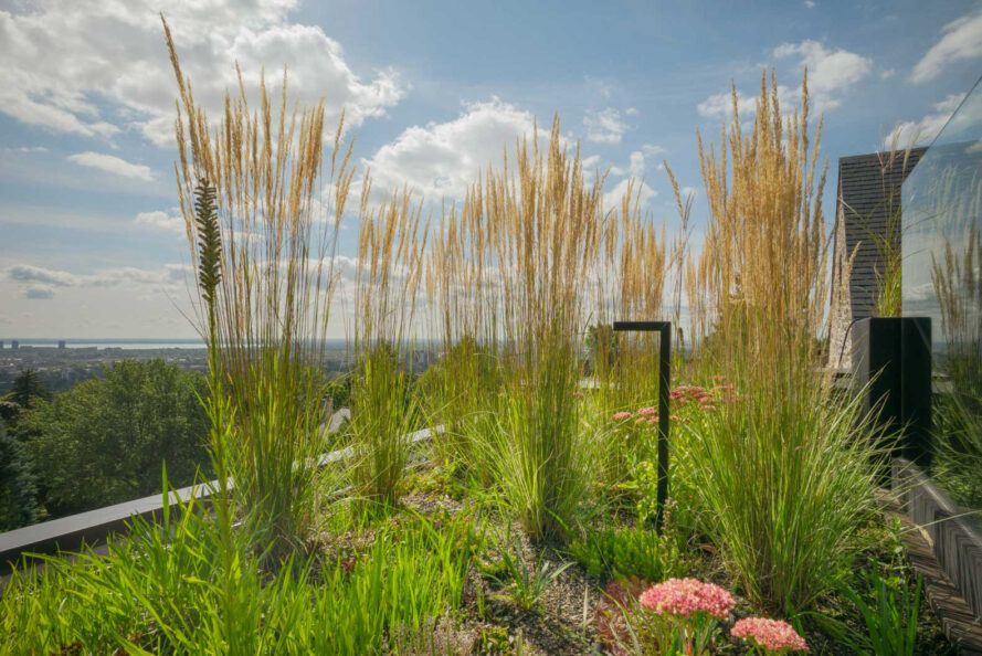 closeup of tall grasses on a roof