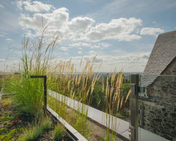 tall grasses on a rooftop overlooking hilly landscape