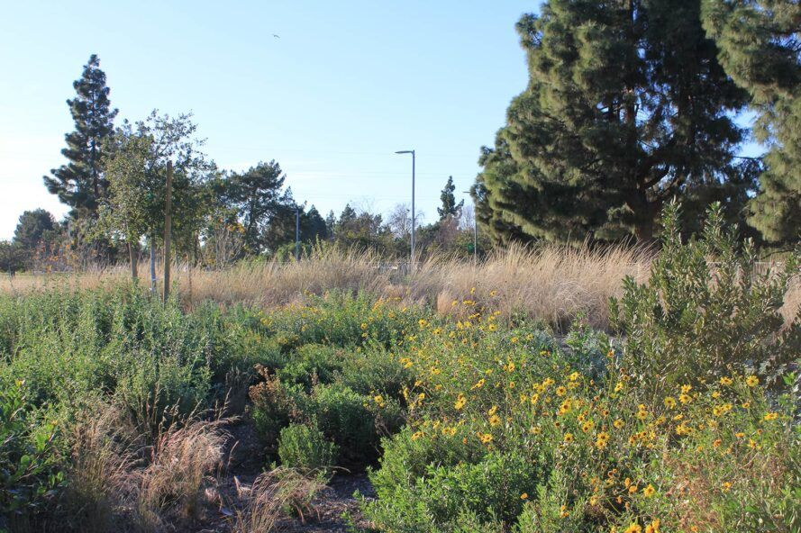 native flowers and grasses in a park