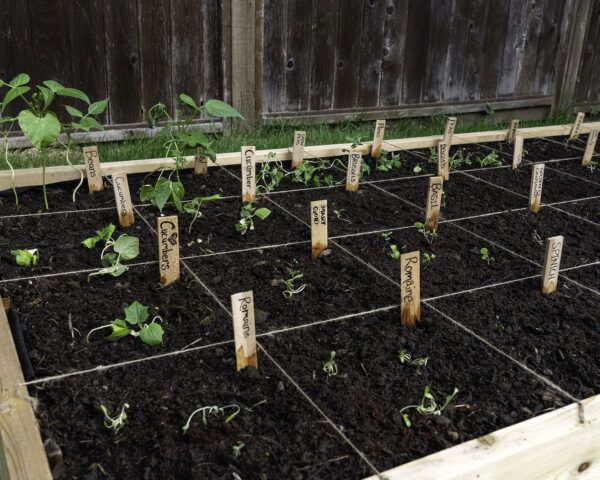 raised garden bed with sections for different crops