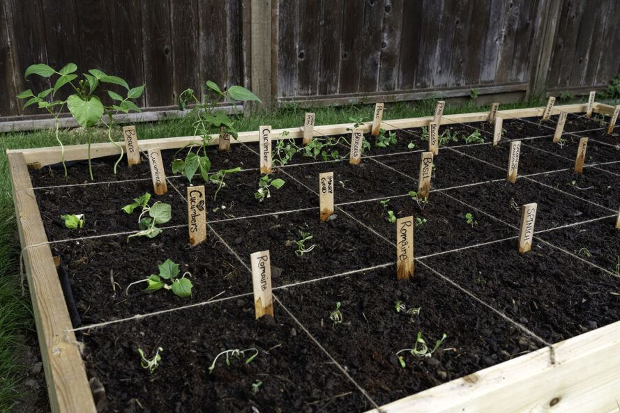 Raised garden beds with sections for different crops