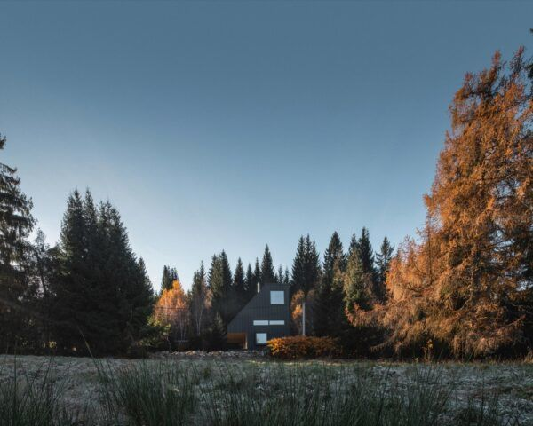 angled black cabin in forest during autumn