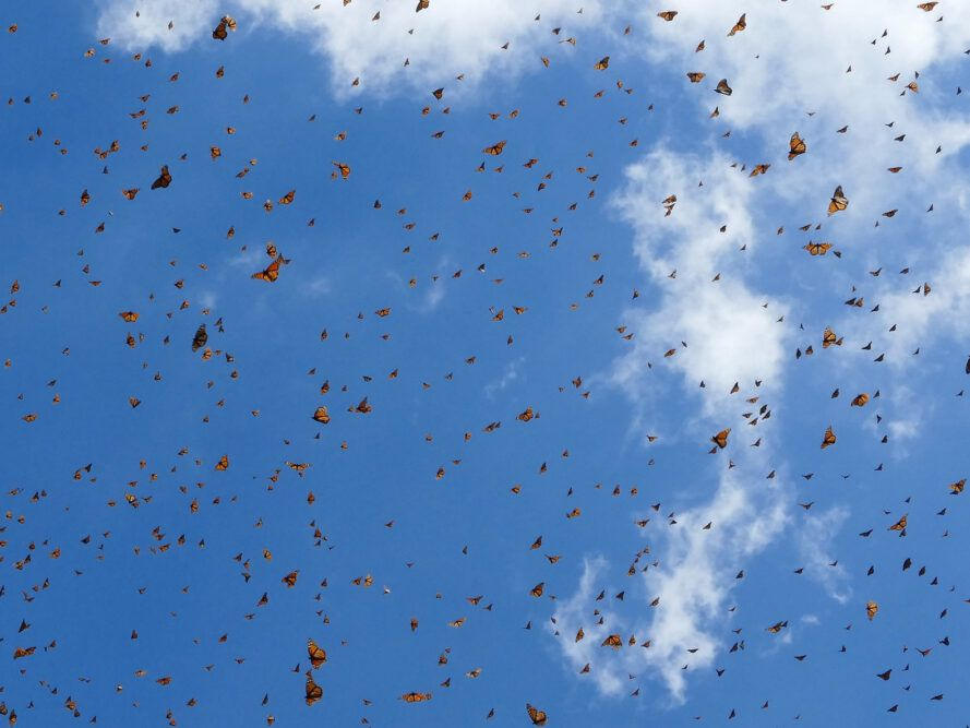 blue sky filled with butterflies