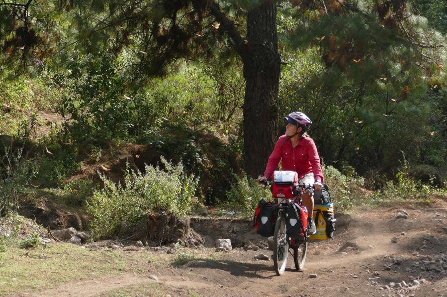 Dyman riding bike through forest filled with monarch butterflies