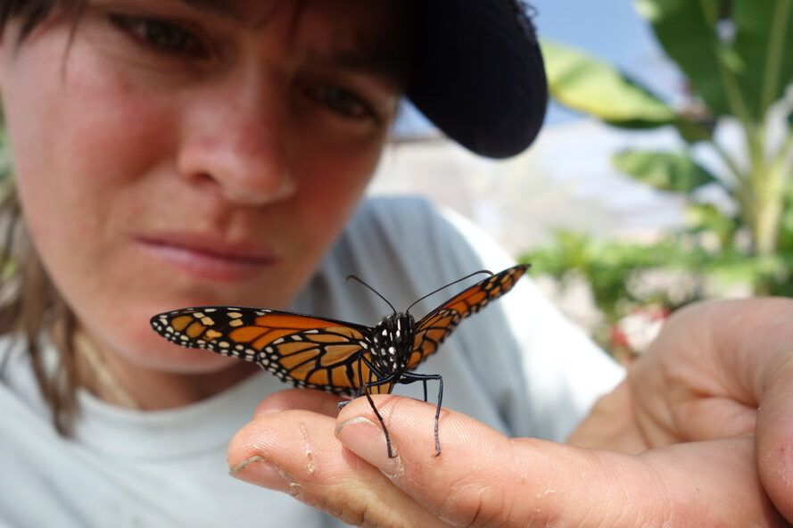 monarch butterfly resting on Dykman's hand