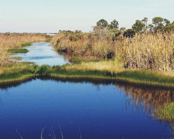 wetlands and tall grasses in Florida