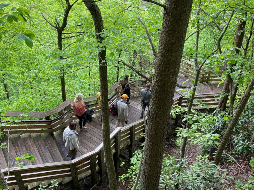 people walking wood path through forest