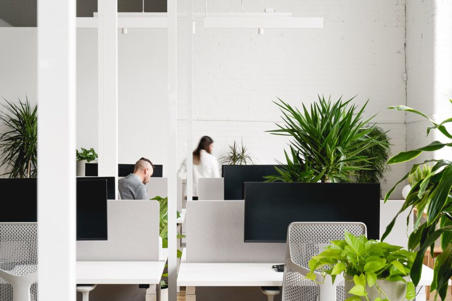 people working at desks covered in plants