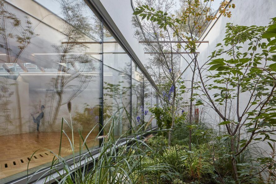 Plants growing behind a glass wall