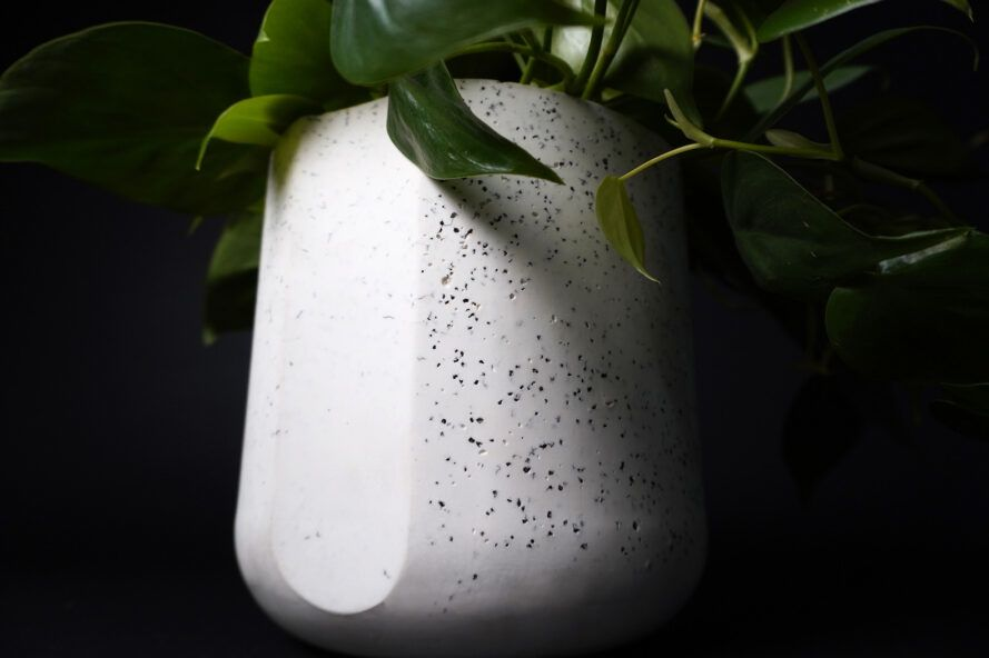 A leafy green plant inside a black and white speckled pot.