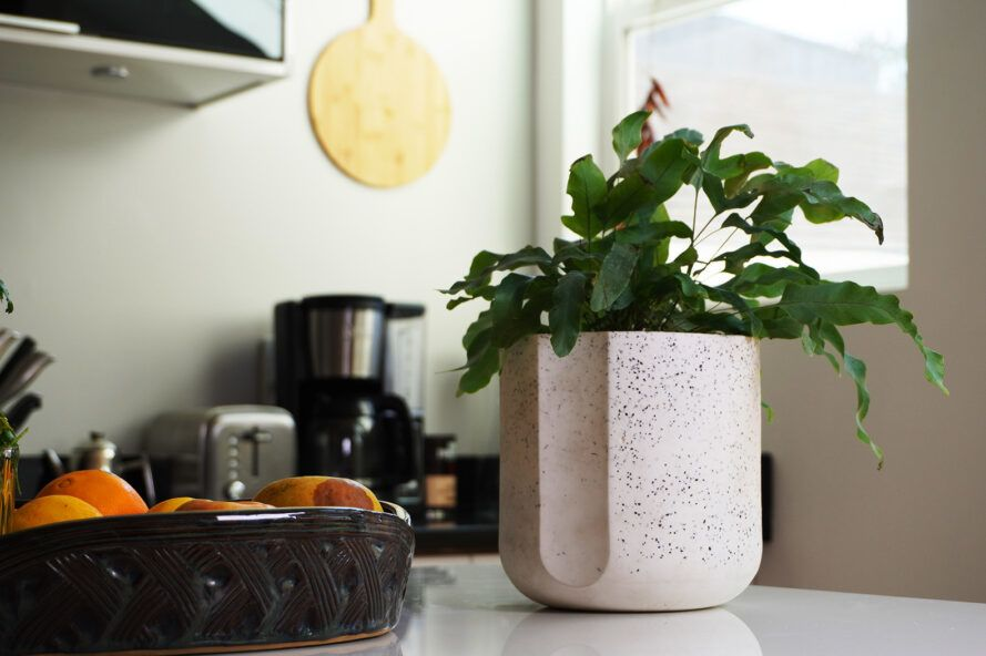 A green plant inside a black and white speckled pot on a kitchen counter.