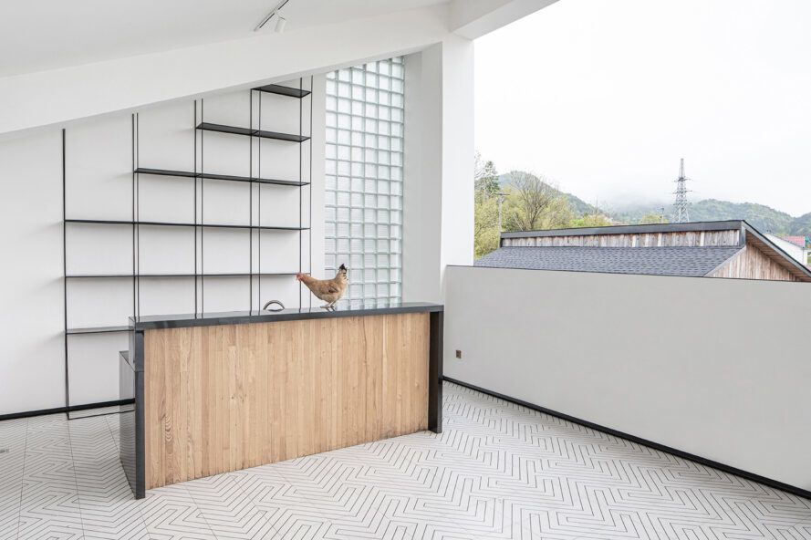Chicken on wooden counter in white room