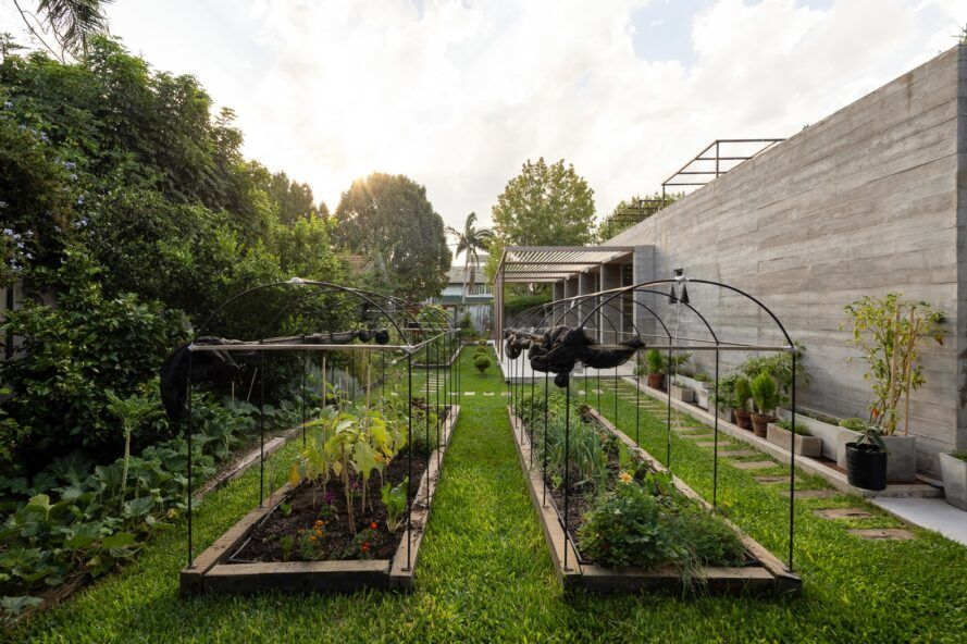 An organic garden with two plots of plants.