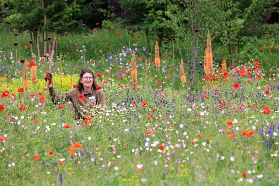 Heather Cooke-team leader, sitting among the flowers, making final preparations for the wildlife garden on the top of RHS Mountain.