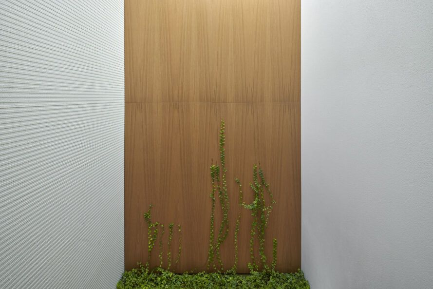 A wood panel in a white wall, with greenery climbing up the wall.