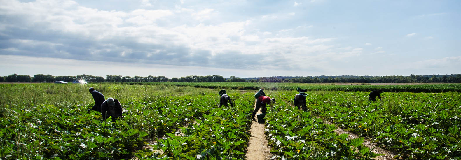 Extreme heat pushes Biden administration to pursue worker protections -