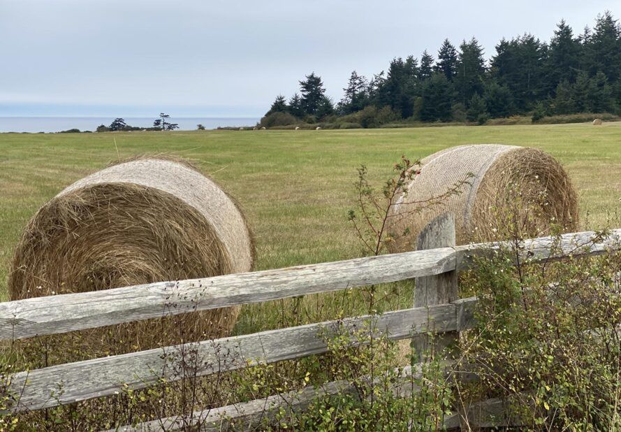 Two hay bales on a green pasture by the coast.