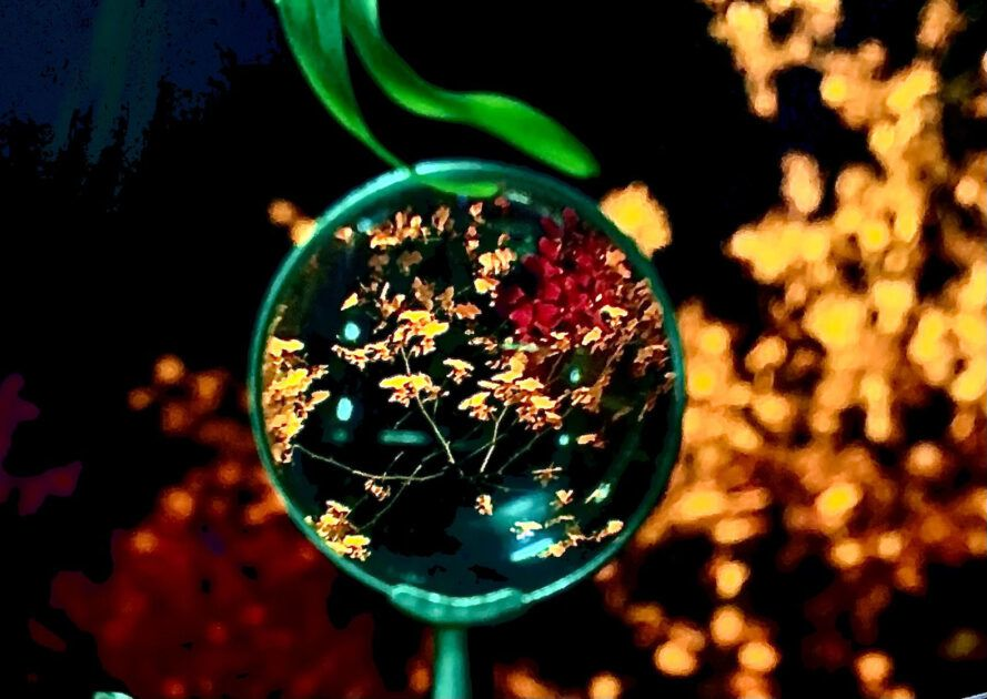 A transparent bubble surrounded by red and orange flowers.