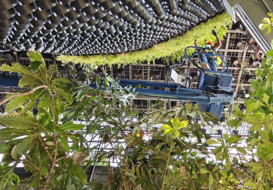 A view from the ground as a construction worker above works on a green wall.