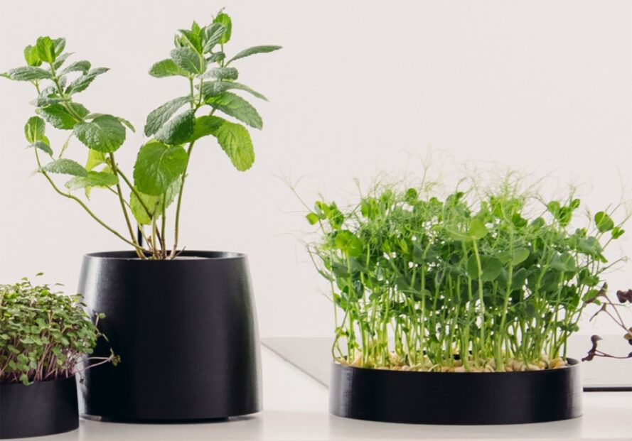 Two potted plants on a counter.