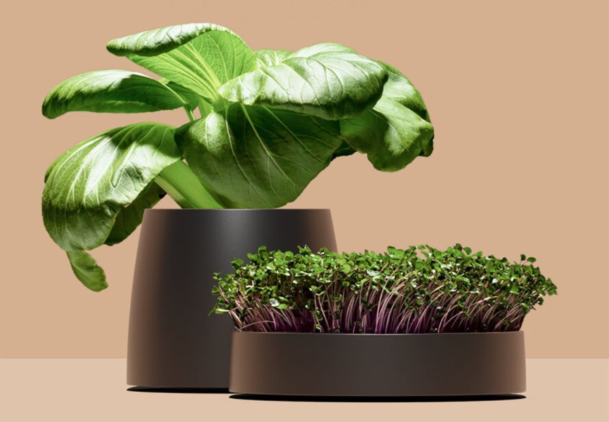 Two potted plants against a brown background.