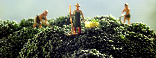matthew Carden, food photography, food art, food art photography, tiny people food photography