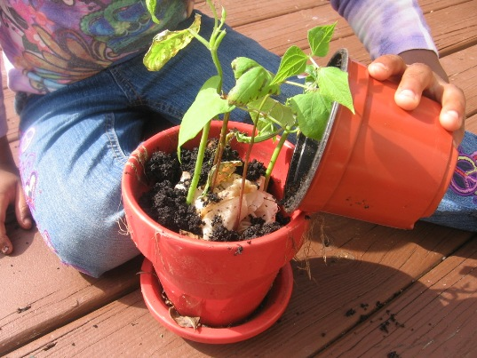 How to grow plants indoors with your toddler inhabitots for Indoor gardening lesson