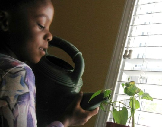 eco activities, green gardening, plants, education, growing plants indoors, teaching toddler how to grow plants, green family, green kids, eco kids, green gardening, green kids gardens, green gardening for kids, teach kids how to garden indoors, growing fruits and vegetables indoors