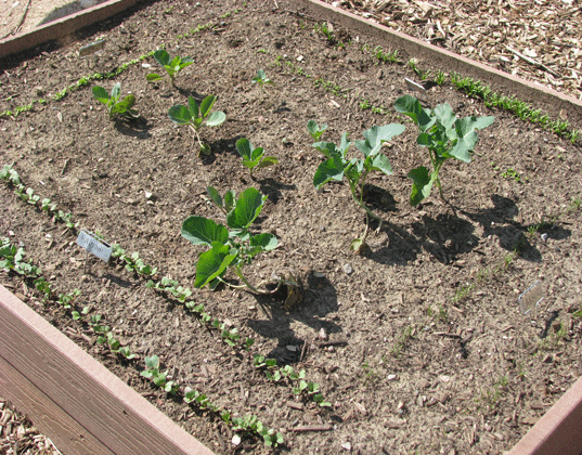 how to start a vegetable garden bed