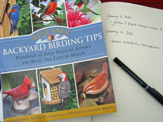 eco kids, green kids, eco baby, green baby, sustainable design for kids, green design, how to, birding, jennie lyon