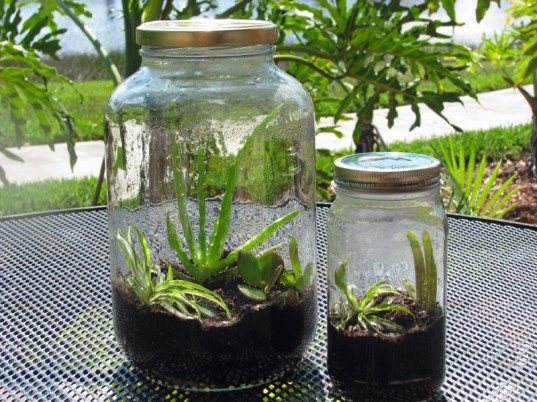 green kids, green baby, eco kids, eco baby, sustainable design for kids, green design, how to, make a terrarium, kids crafts, diy crafts, kids gardening, jennie lyon